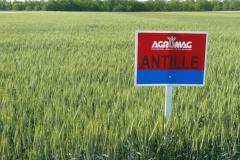 AntilleMT
