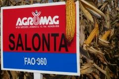 Salonta (FAO 360)