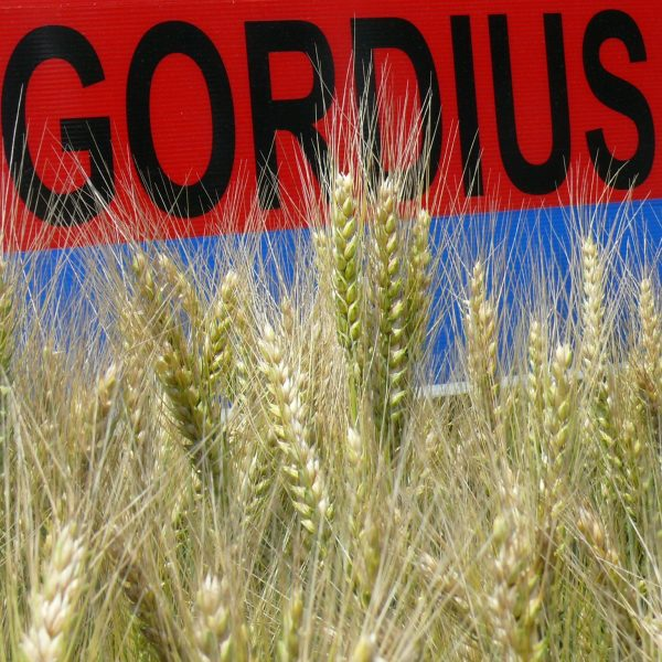 Gordius Farmer A 015