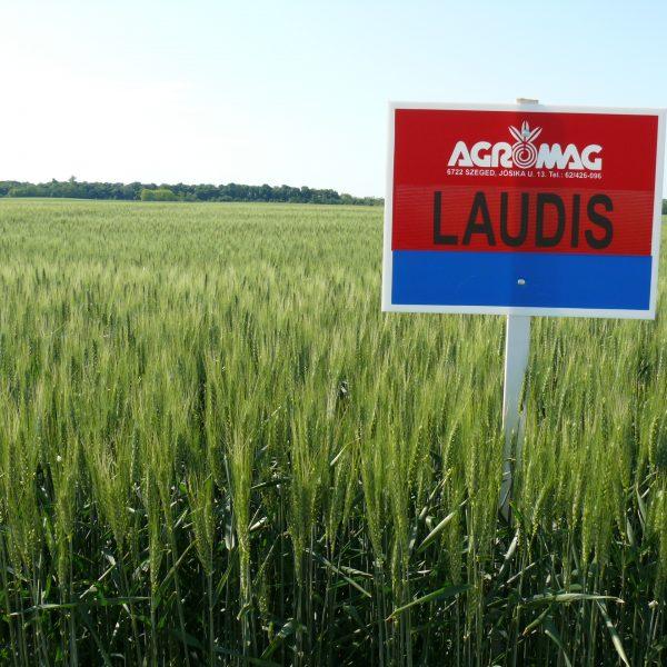 Telekgerendásdemók 012 Laudis