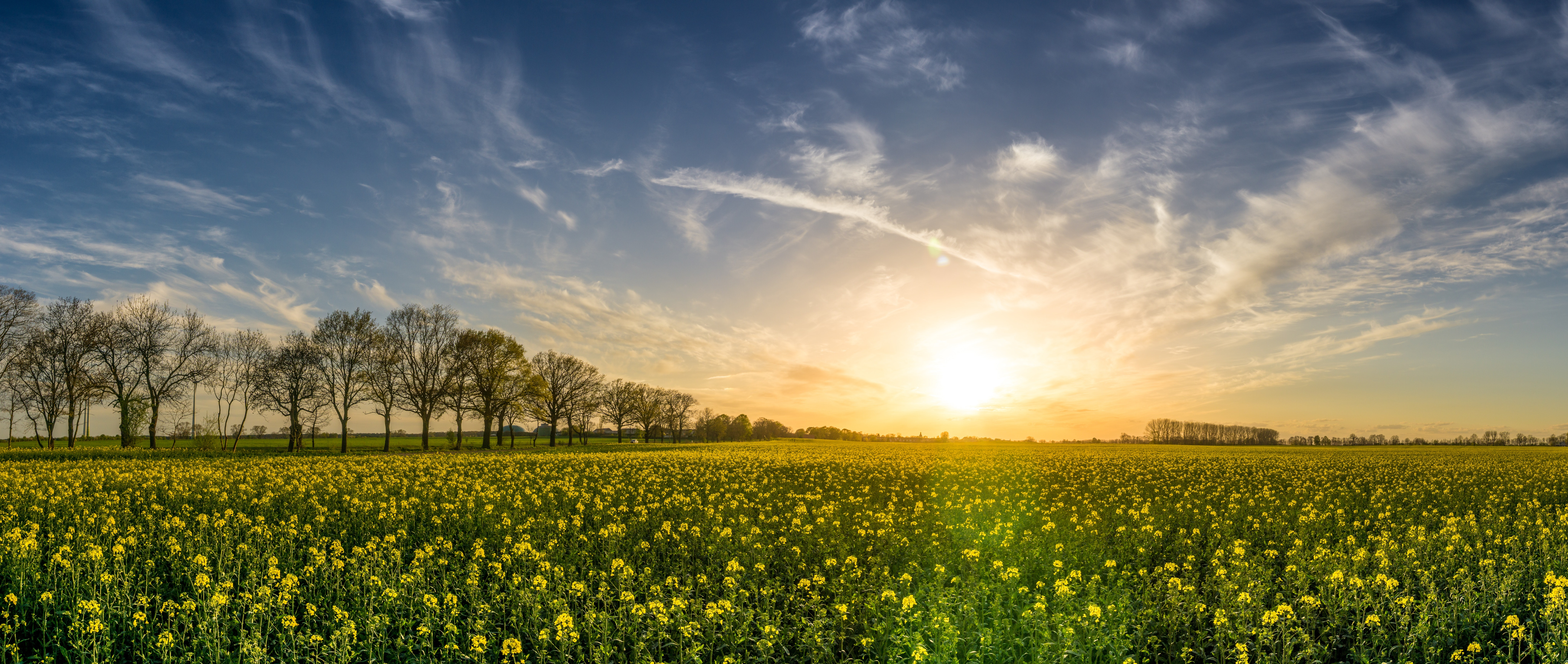 green-manure