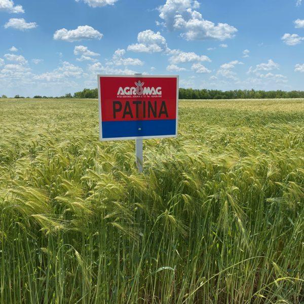 Patina_arpa