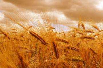 barley-agromag-cover-360x240.png